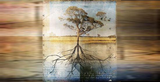 racines d'un arbre