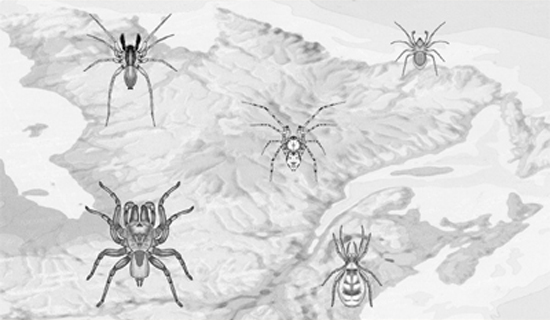 couverture1 Nouvelles observations sur des araignées du Québec