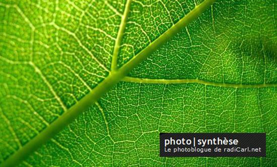 photoblogue