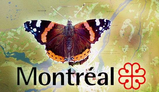 Le Vulcain: Un ambassadeur pour la biodiversité montréalaise