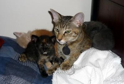 Lorsqu'elle fût en forme, tante Jade savait prendre soin des chatons