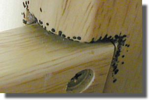 Le myst re des piq res nocturnes durant notre sommeil sur la piste des punai - Punaise des bois maison ...