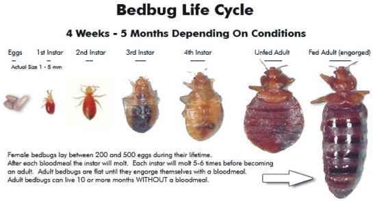 comment se dbarrasser des puces dans une maison image intitule kill fleas naturally step 2. Black Bedroom Furniture Sets. Home Design Ideas