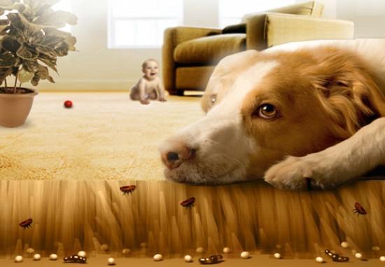 Remede de grand mere contre les puces dans la maison segu maison - Remede contre les puces de chat ...